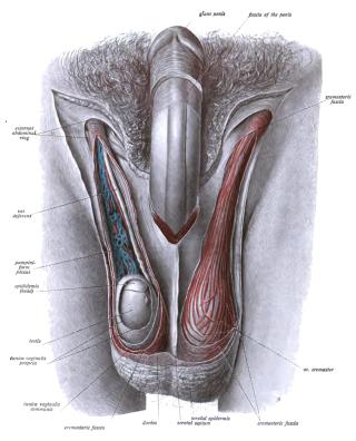 szuper pénisz megnagyobbodás erekciót rögzíteni