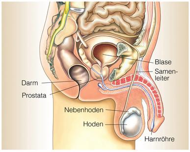 Én kétszer kezelöm a krónikus urethroprostatitist