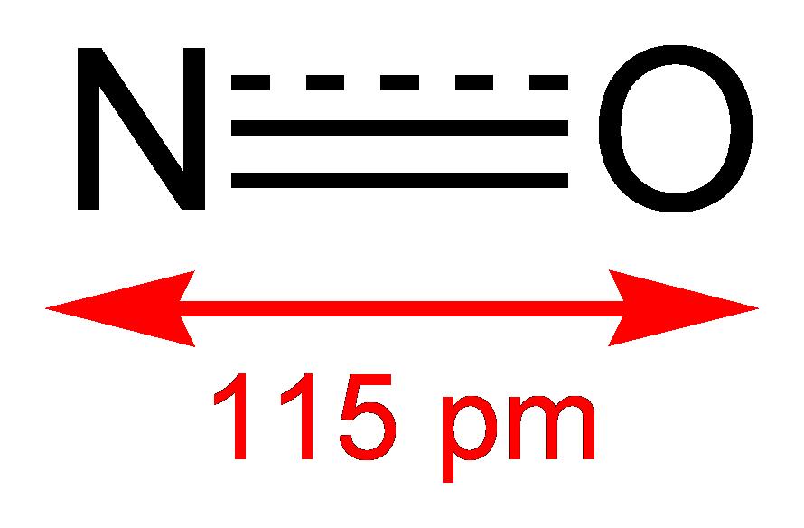A nitrogén-monoxid biológiai funkciói