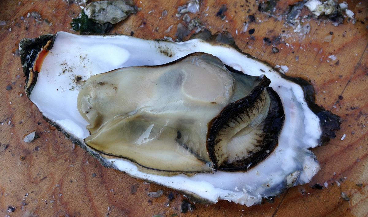 TOP 5 egészséges tenger gyümölcsei férfiaknak