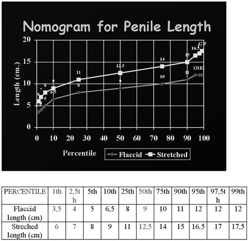 a pénisz átlagos mérete az erekcióban
