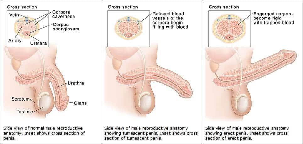 csökkent erekció hogyan kell kezelni a pénisz megnagyobbodása és az életkor