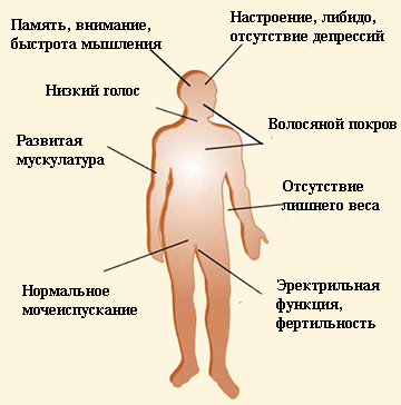 A pénisz mérete és a pénisznövelő eljárások