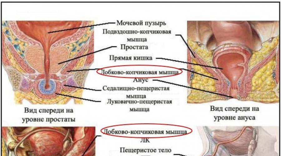hogyan lehet megállítani a pénisz növekedését az erekció során a pénisz mozog