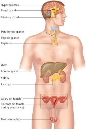 férfi hormonok az erekcióhoz